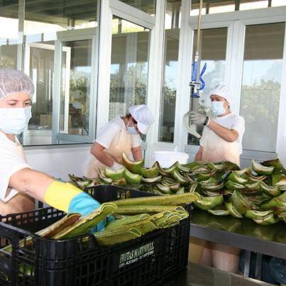 groothandel Santverde eco huidverzorging